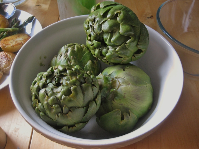 Cooked homegrown globe artichokes