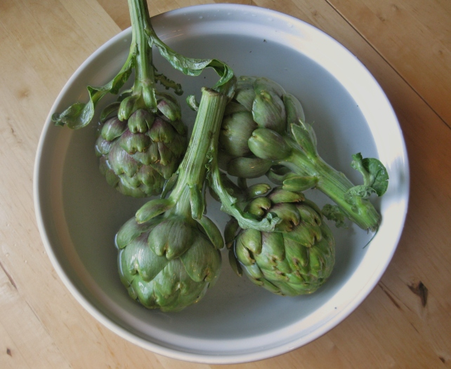 Soaking the fresh globe artichokes in salt water