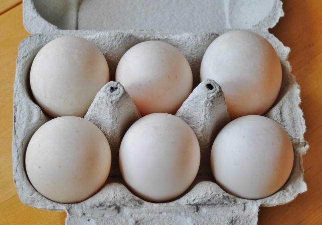 Fresh duck eggs for poaching